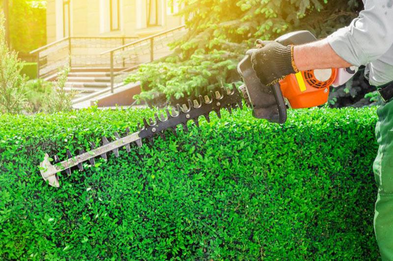 Hedge Cutting, Wrexham